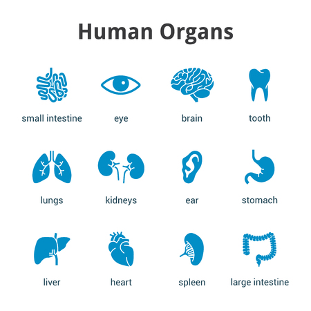 Blue medical human organs icon set on a white background