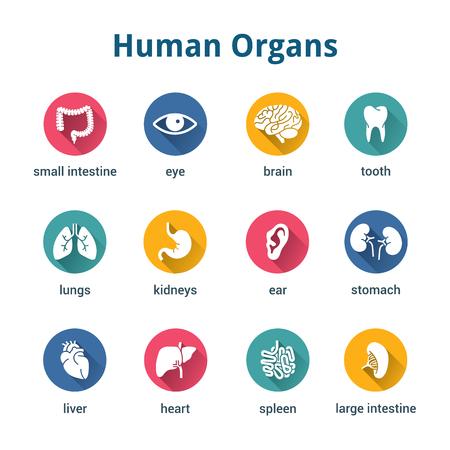 Medische menselijke organen icon set Stock Illustratie
