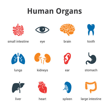 Medical human organs icon set Stock Illustratie