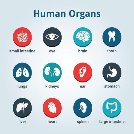 viscera: Medical human organs icon set Illustration