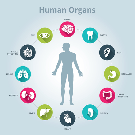 human icons: Medical human organs icon set with body in the middle