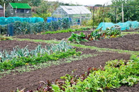 Prepared allotments for the winters vegetable planting season