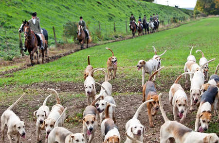 wanderers: ROPLEY, ENGLAND - OCTOBER 29: Members of the Hampshire Hunt cross the fields below Wanderers curve on October 29, 2011 at Ropley. Hunting specific wild animals with dog packs in the UK is illegal.
