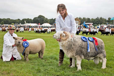 showground: NEWBURY, UK - SEPTEMBER 21  The winners of the Sheep and Ram livestock competition show off there winning animals in the parade ring at the Berks County Show on September 21, 2013 in Newbury  Editorial