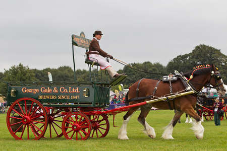 fayre: NEWBURY, UK - SEPTEMBER 21  An unnamed driver demonstrates their horse and dray working team in the main show arena at the Berks County on September 21, 2013 in Newbury  Editorial
