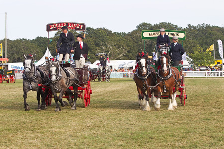 entrants: BROCKENHURST, UK - JULY 31: Entrants competing in the heavy horse category give a display of synchronised manoeuvring around the main arena at the New Forest Show on July 31, 2014 in Brockenhurst