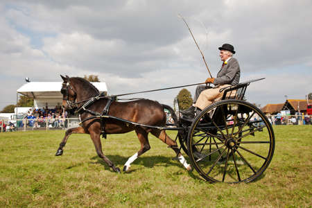 unnamed: NEWBURY, UK - SEPTEMBER 21: An unnamed competitor in the horse and gig competition displays his rig and driving skills to the judges and public at the Berks show on September 21, 2014 in Newbury