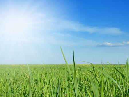 Green field Stock Photo - 5835025