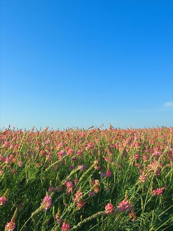 Red grass field  photo