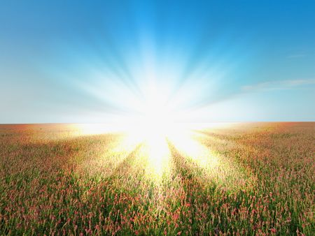 Flower field with sunbeam photo