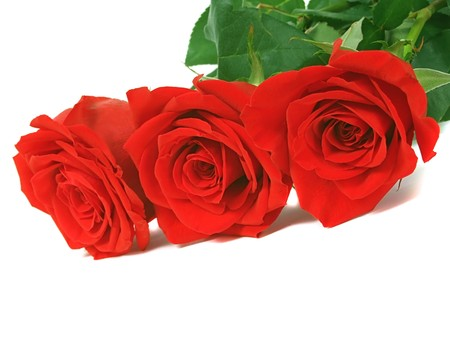 Red roses over white photo
