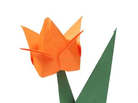 Origami tulip over white  photo