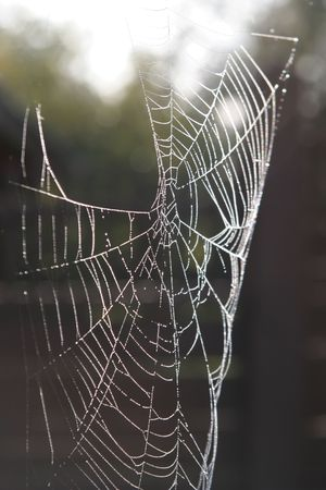 Morning dew on spider web photo