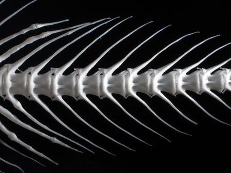 Sea fish white bone close-up Stock Photo - 4717521
