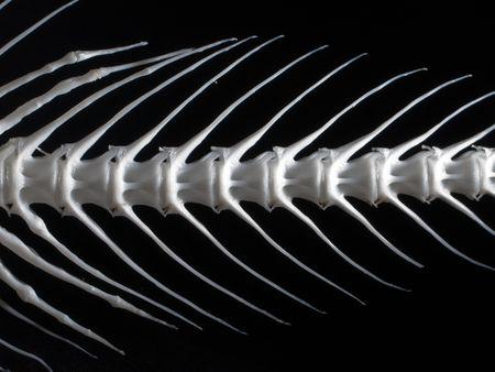 Sea fish white bone close-up Stock Photo - 4717521
