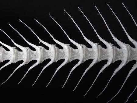 fish exhibition: Sea fish white bone close-up