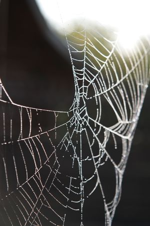 Morning dew on spider web beauty macro pattern photo