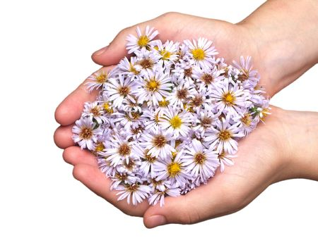 White nature chamomile flower background frame photo