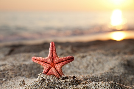 Summer vacations - starfish on sunset sea sand beach Stock Photo - 10826227