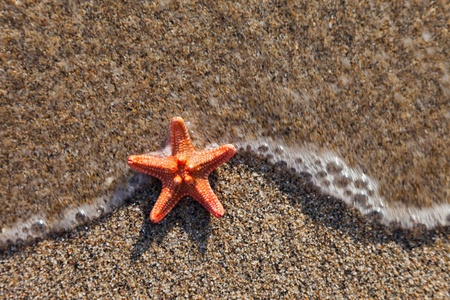 sea stars: Summer vacations - starfish in water waves on sea sand beach