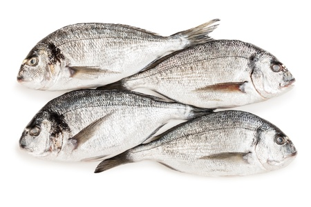 Frozen meat: Healthy eating seafood - raw gilthead fish food heap white isolated