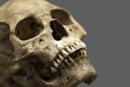 skeleton skull: Human anatomy - ancient people skull bone  Stock Photo