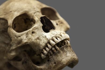 Human anatomy - ancient people skull bone  Фото со стока