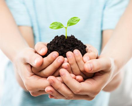 Nieuw het levensconcept - ouder en kindhanden die de kleine groei van het groene installatiespruitblad houden bij geïsoleerd de hoopwit van de vuilgrond