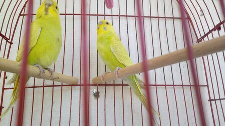 A pair of parrot birds on a branch in a cage Standard-Bild