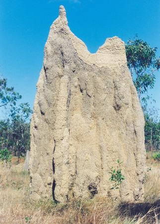 really: really australian termit mound at termit mound valley
