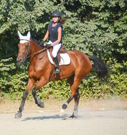 competitividad: saltar jinete al galope speedly con su caballo Foto de archivo