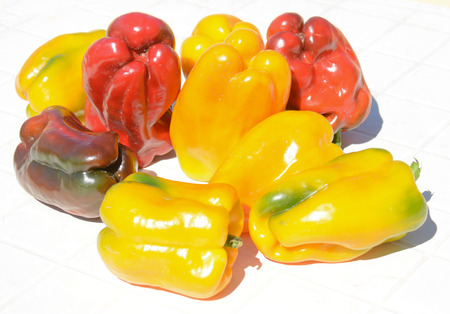 freshly picked: peppers freshly picked organic natural product of the land Stock Photo