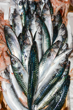 fished: freshly fished mackerels at fish market in italy