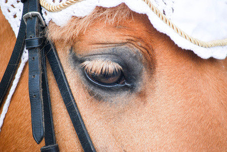 pretty pony: a pretty detail of eye of pony as background