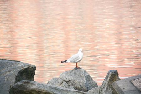 marine bird: tired seagull on a cliff rockl