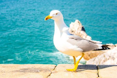 marine bird: Seagull show itself as a modern fashion model Stock Photo