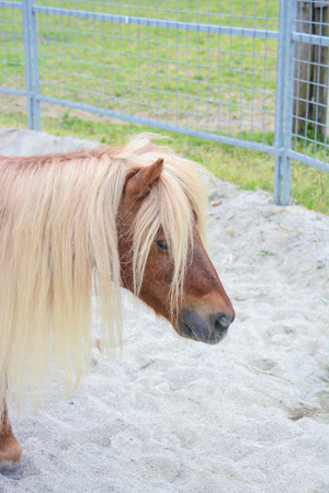 pretty pony: pony in a paddock wait for play