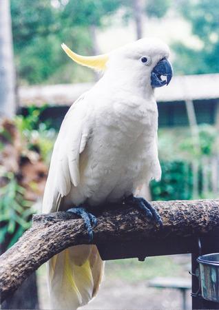 cacatua original australia bird