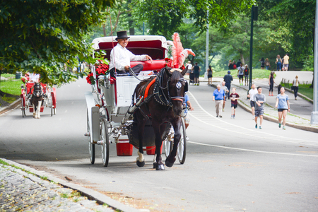 in central park NYC there are many tourist carriages embellished with flowers and colorful drapes that take tourists around the park to make admire all the most remote and beautiful corners, used for