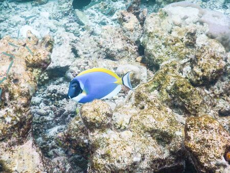 Maldives, plankton and tropical fishes near the re-growing coral reef 版權商用圖片