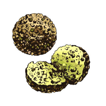 Falafel balls. Dish middle eastern traditional food. Vector color vintage hatching illustration isolated on white