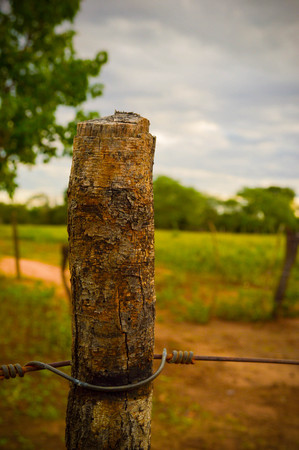 Photograph of a wooden stump surrounded by wire.