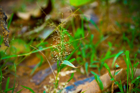 crocket: Environment with some grasses Stock Photo