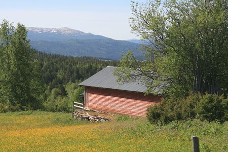 Norwegian pasture photo