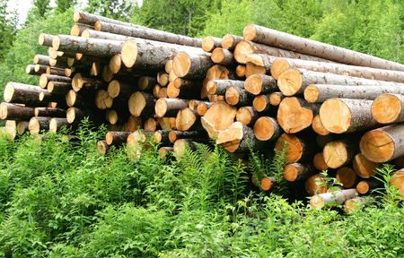Timber logs Stock Photo