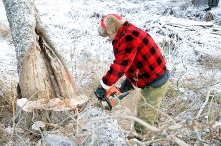 Senior sawing down old trees Stock Photo