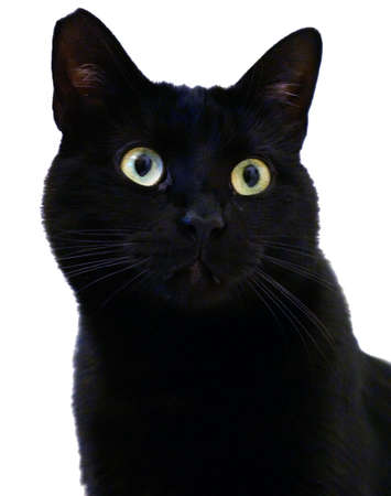 black moor: black cat on a white background Stock Photo