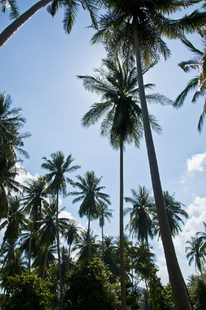 Palm Trees in Paradise