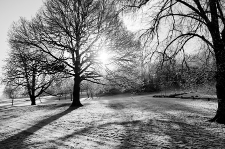 Sunlight shining through bare trees in the middle of a frosty winters morning