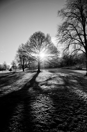 Naked trees in the harsh Scotish winter with the bright sun penetrating through